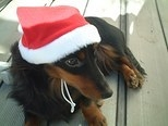 Office doll