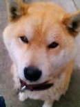 犬×犬さん