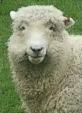kei&sheep