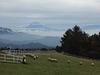 富士山とヒツジ
