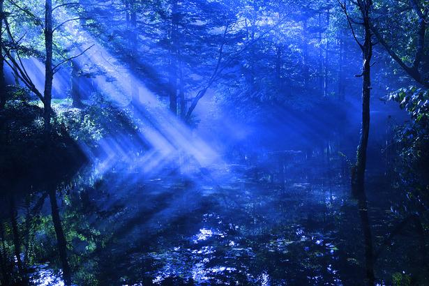 夏の夜の夢のよう ~朝が来る前に妖精を消せ~