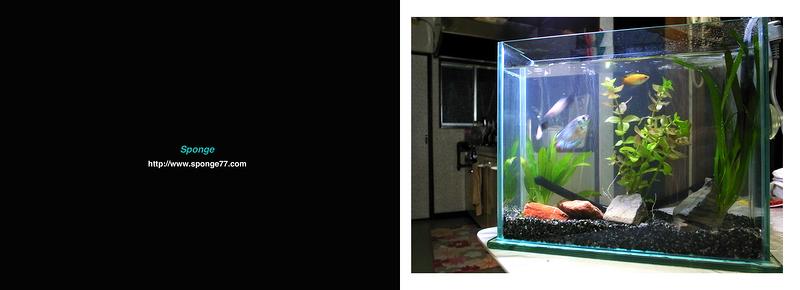 魚のいない水槽