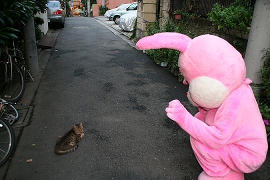 「三毛猫と退屈」/「音楽と乳房」