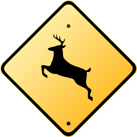 飛び出す鹿フェスティバル