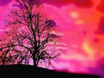 桜に結ぶ春の夢
