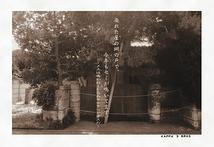 廃れた屋(おく)の網の戸で、今年もセミが鳴いています。