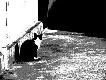 猫は地球を見て美しいと思わないよ