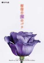 新宿の紫のバラ