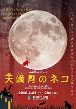 天満月のネコ