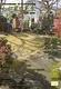 わが家の芝生