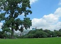 新宿御苑・イギリス風景式庭園