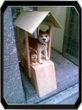 Live Garage 秋田犬