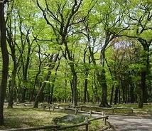 三鷹の森ジブリ美術館横・木もれ日原っぱ